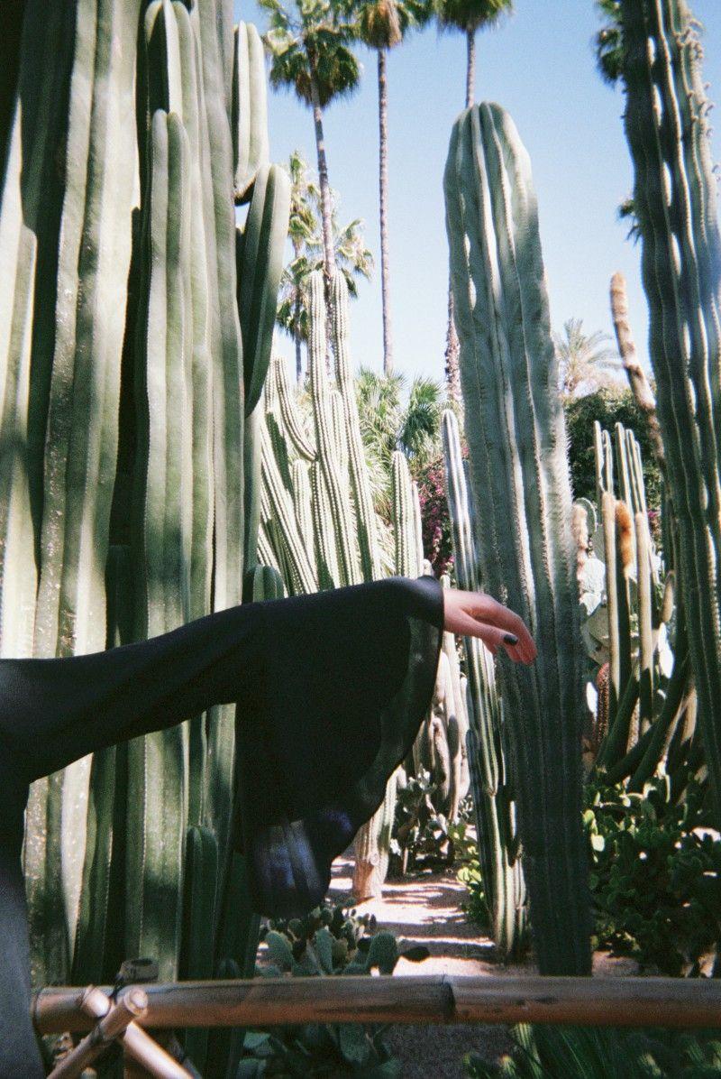 Botanique details at Jardin Majorelle in Marrakech, by ...