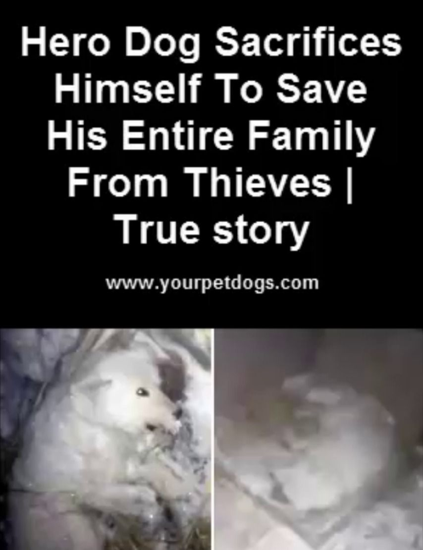 Hero Dog Sacrifices Himself To Save His Entire Family From Thieves