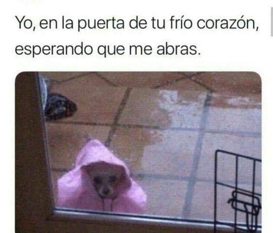 Yo En La Puerta De Tu Frio Corazon Memes Divertidos Memes Memes Romanticos