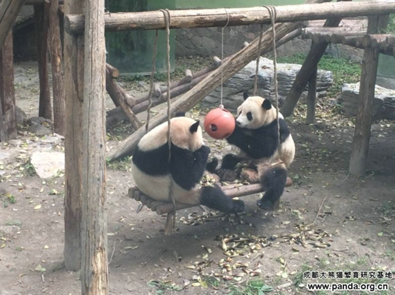 ARed Ball for Sisters Shuang Xin and Shuang Xi
