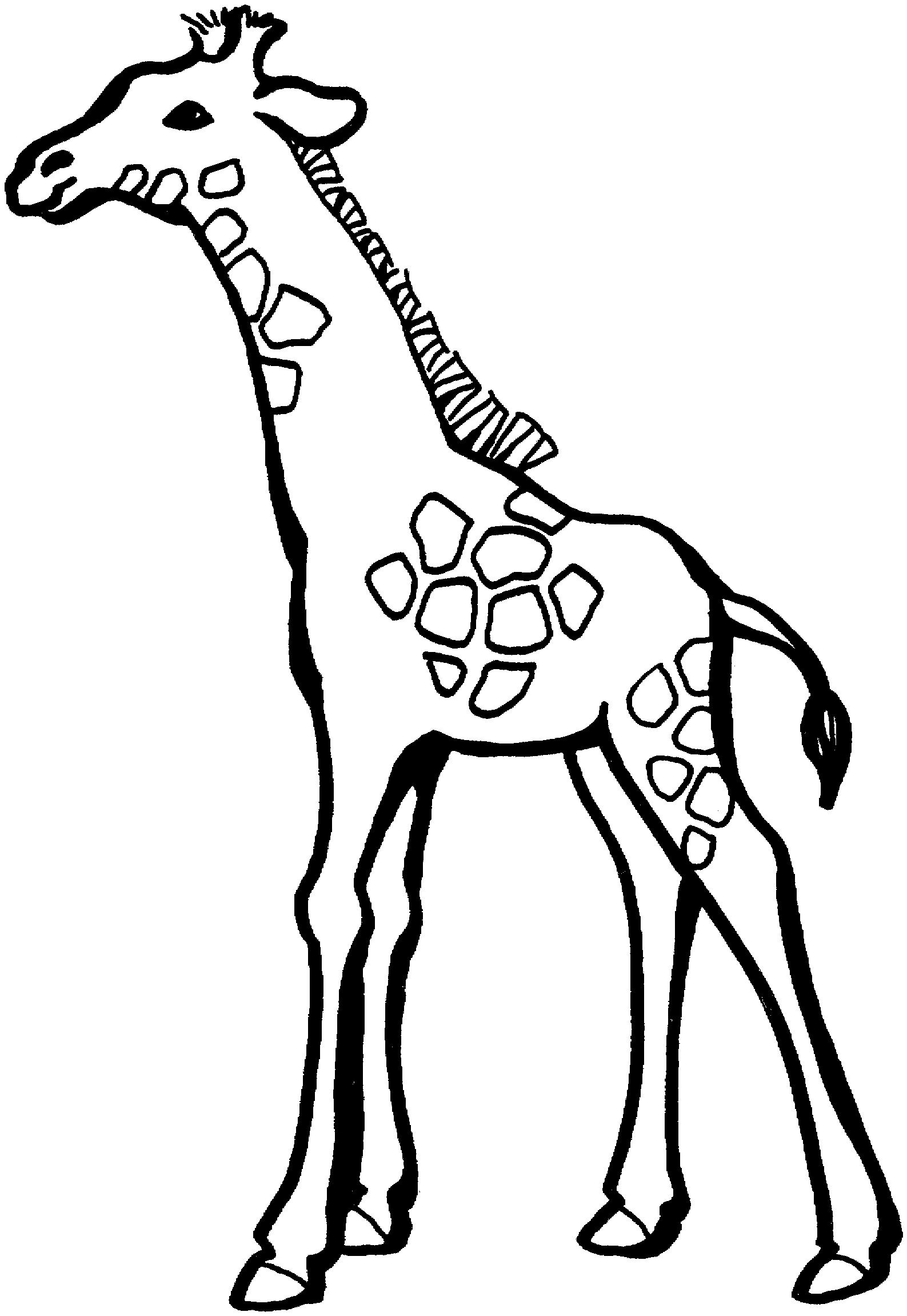 Giraffe Coloring Pages Printable Colorbook Pinterest Giraffe
