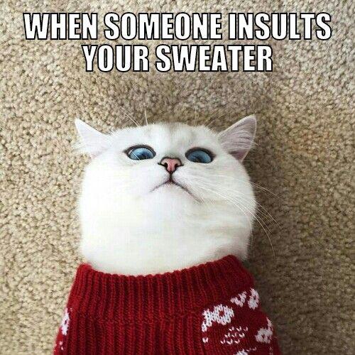 Shocked sweater cat meme