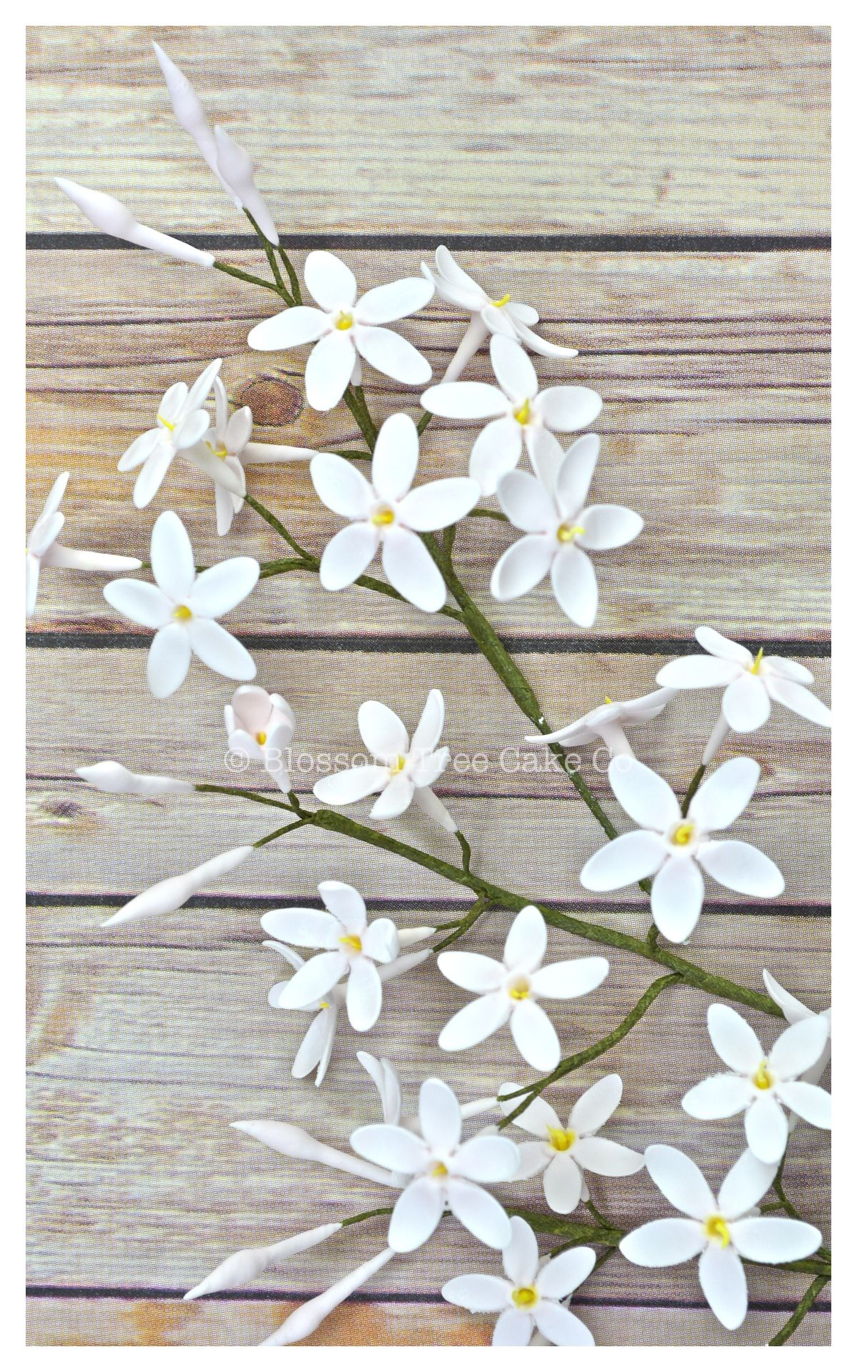 Jasmine Flowers To Decorate Your Wedding Or Special Celebration Cake