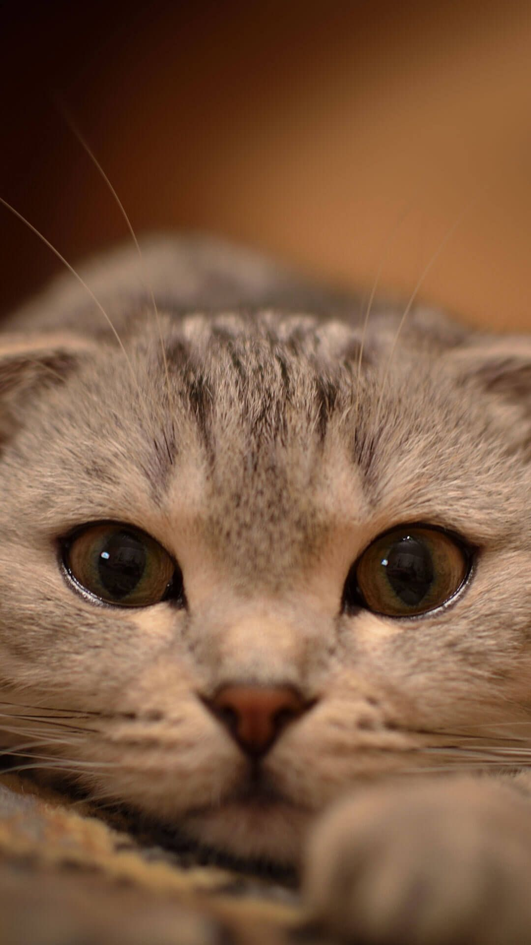 Cute Cat Wallpaper For iPhone 6 Plus HD Cute cat