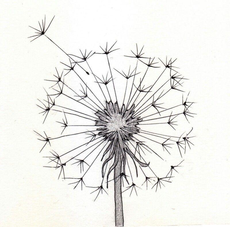 Dandelion Pencil Drawings Tumblr Drawings Cool Drawings