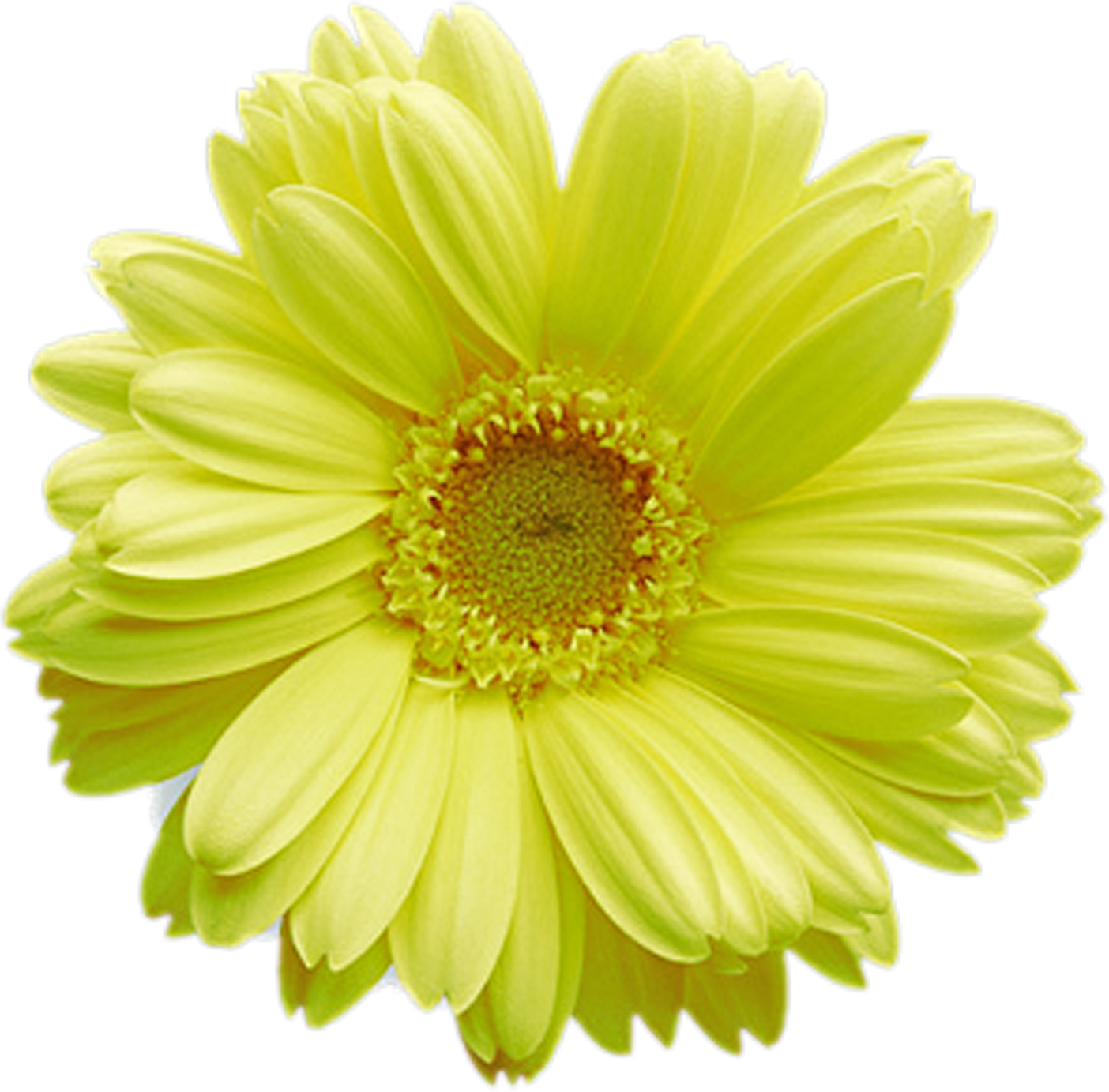 Flower Wallpaper Daisy Stems Blossoms Home Posts Trunks Flowers Messages