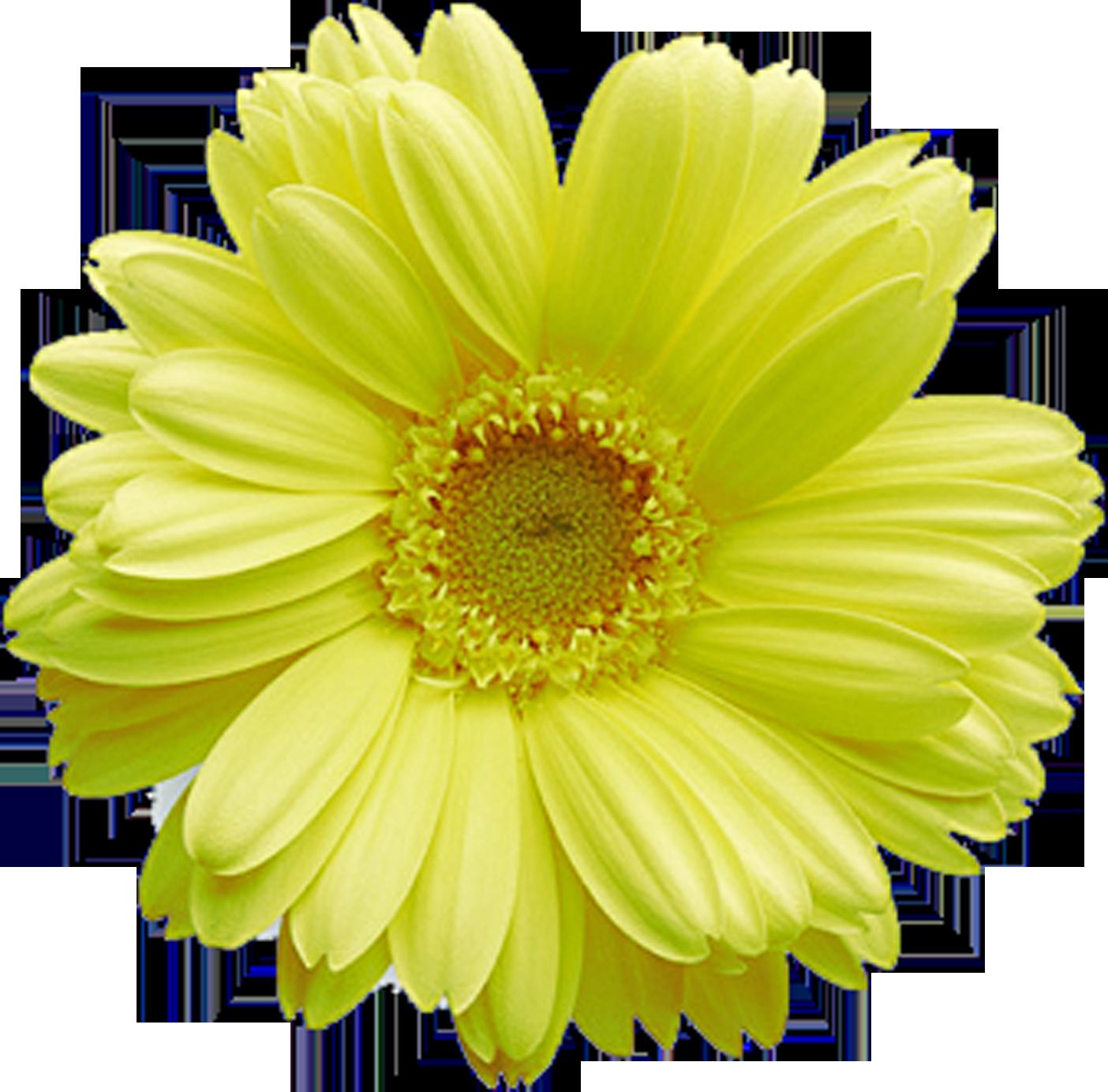 Flower Wallpaper Daisy Stems Blossoms Home Posts Trunks Flowers Messages