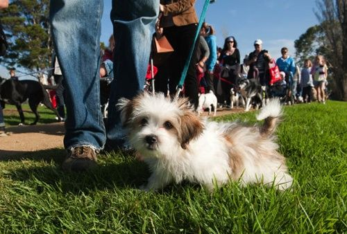 If You Re In Wa You Re Walking To Support An Organisation Who Regularly Has Only A Handful Of Pets Available For Adoption Yet Refuse Pet Adoption Dog Cat Pets