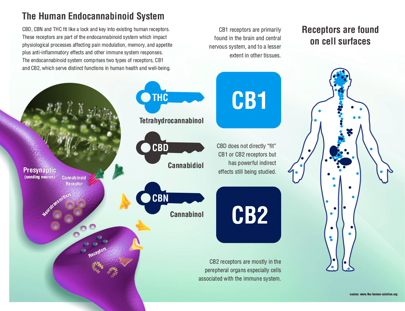 Best 25+ Endocannabinoid system ideas on Pinterest