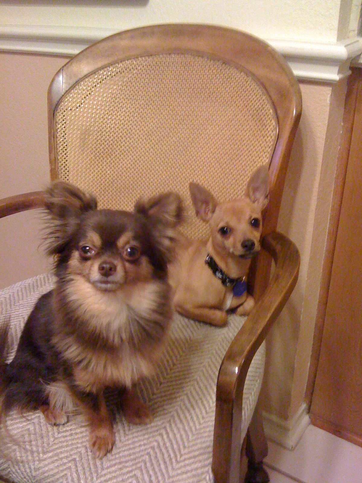 Boo with his homey, Yoda. Pet sitting business, Doggy