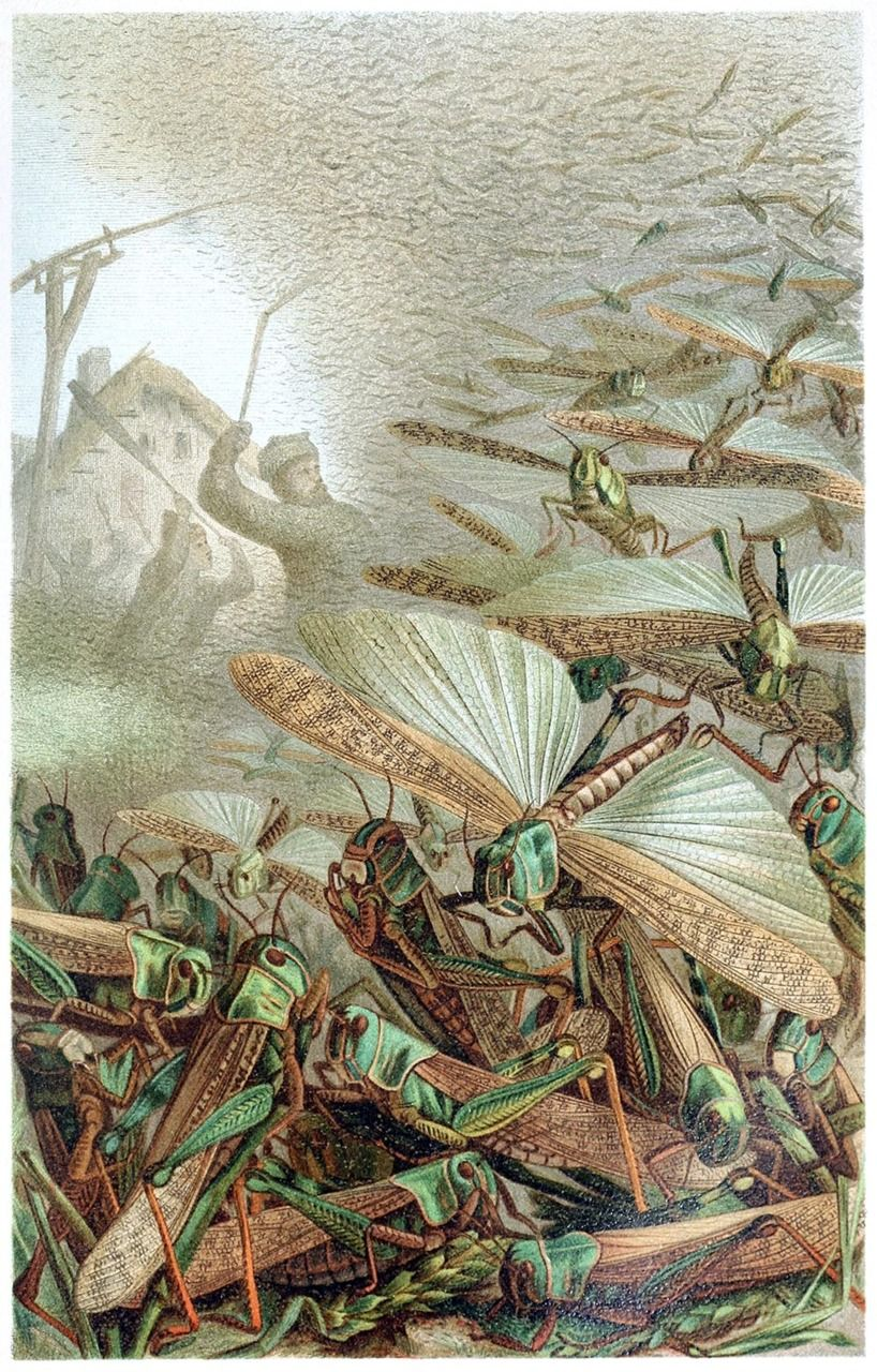 Image result for swarm locusts paintings