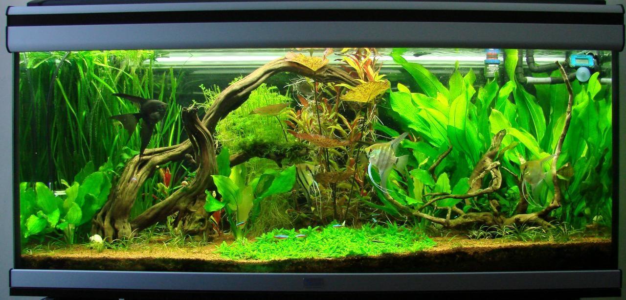 Que plantas y peces son idóneos para un acuario amazónico ...