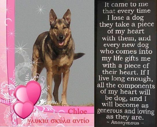 Afscheid Van Mijn Hond Honden