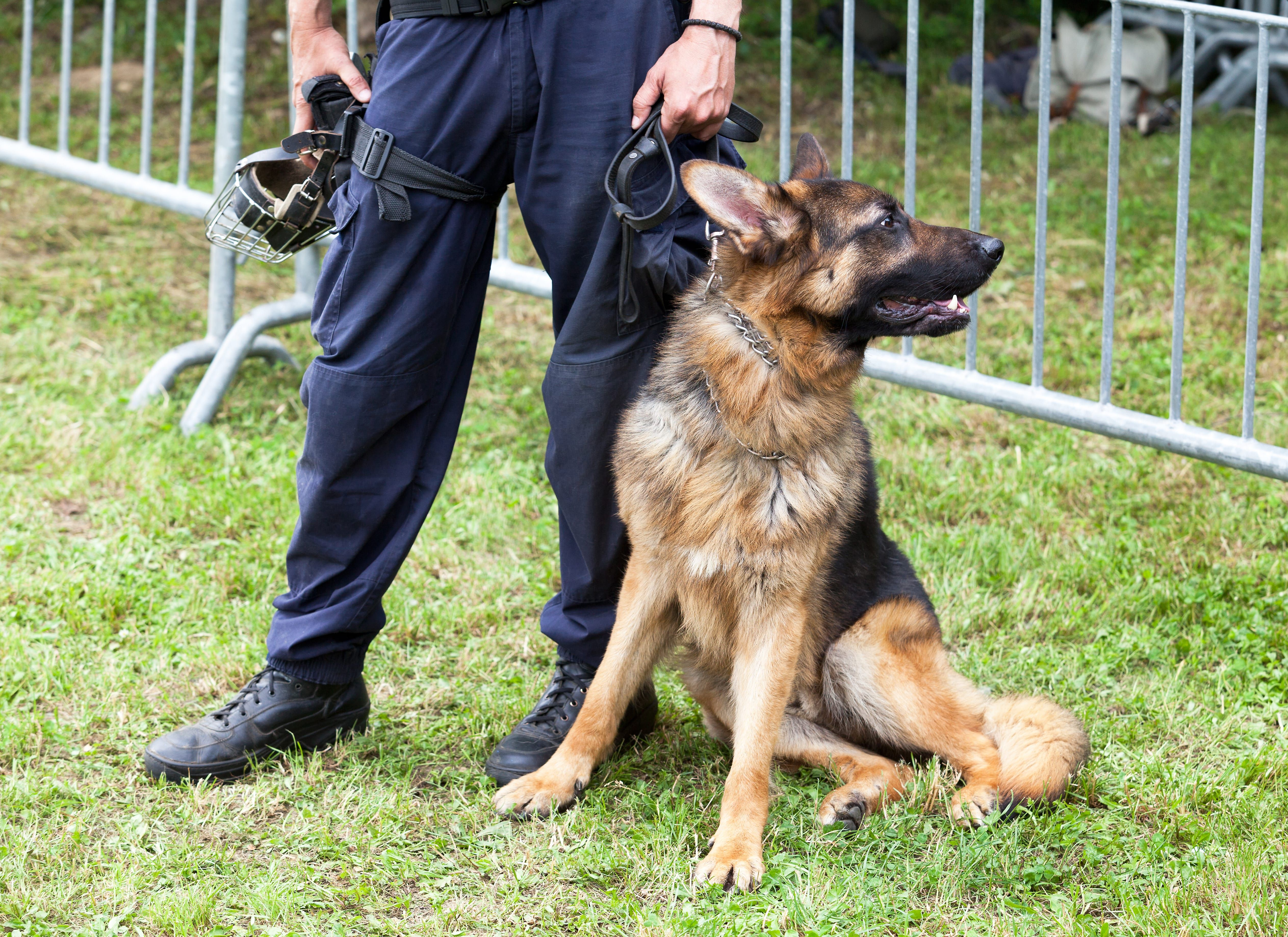 Strong Courageous Police Dog Names Police Dog Names Police