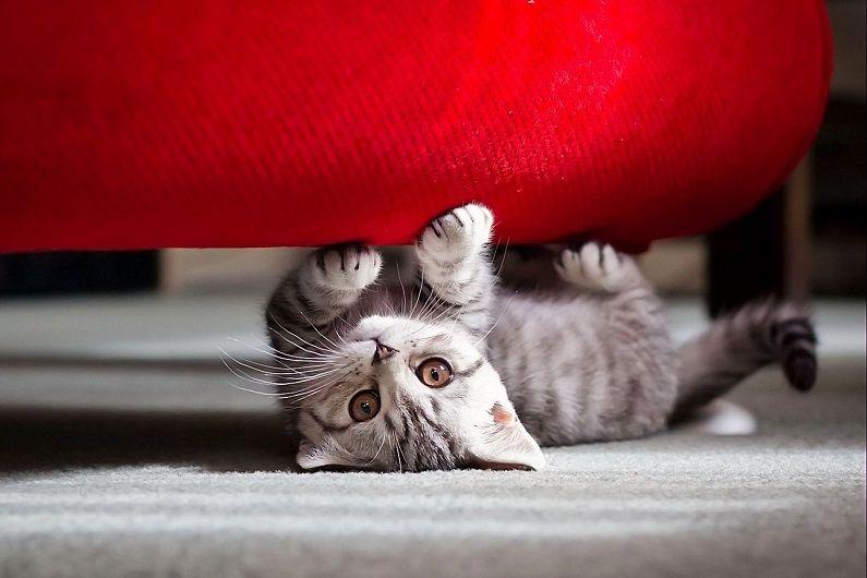 Диван и кошка: материалы для обивок антикоготь   Кошачьи ...