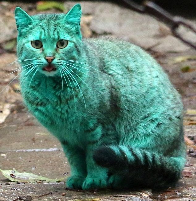 No, this is not photo shop! This kitten really  looks like this! It has been found in Varna, Bulgaria! Apparently it found itself at home in a locked garage, where non toxic facade paint was stored.