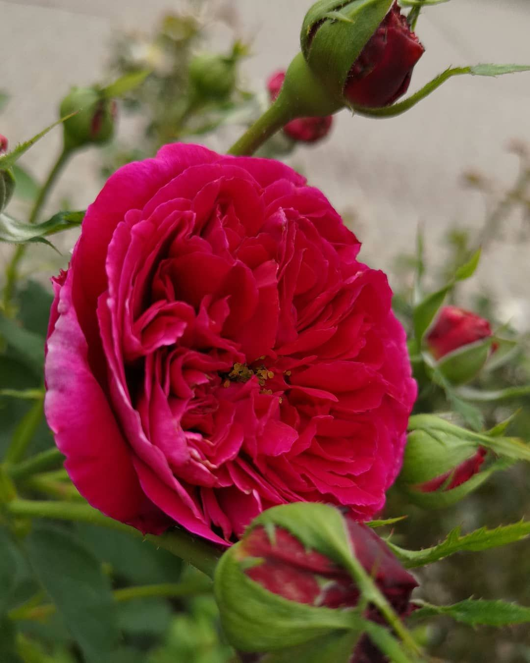 Insekten Garten Foto Fotografie Stadt Kultur Happyday Kunst Blumen Rosen Landschaft Natur Rosen Global Flowers K Garten Fotografie Blumen Wiese