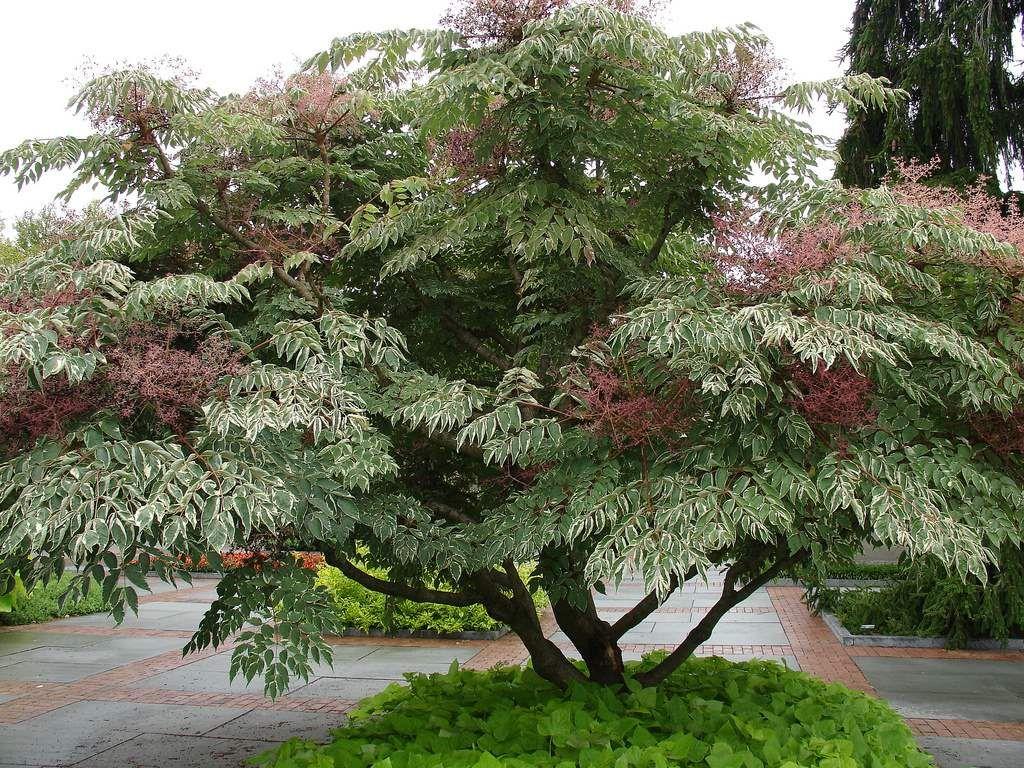 10 rboles para jardines peque os ideas de jardiner a for Arbustos pequenos para jardin