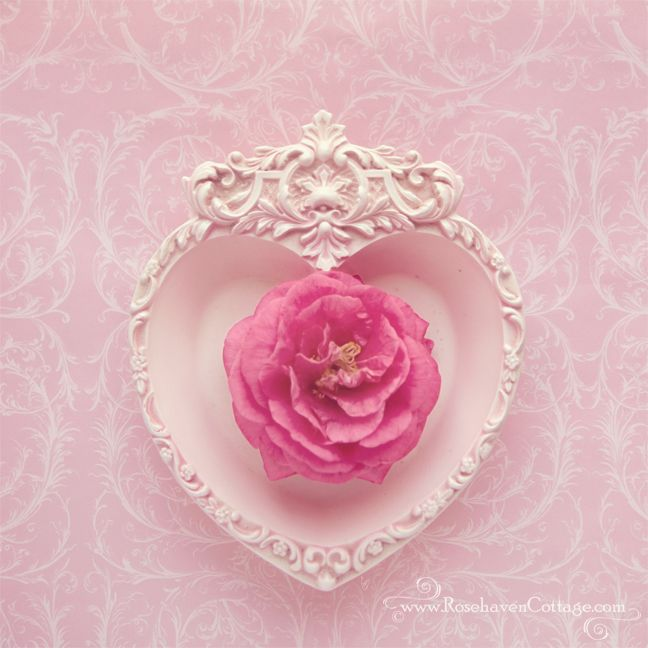 Pink heart - Pink camellia (by Cindy Garber Iverson)