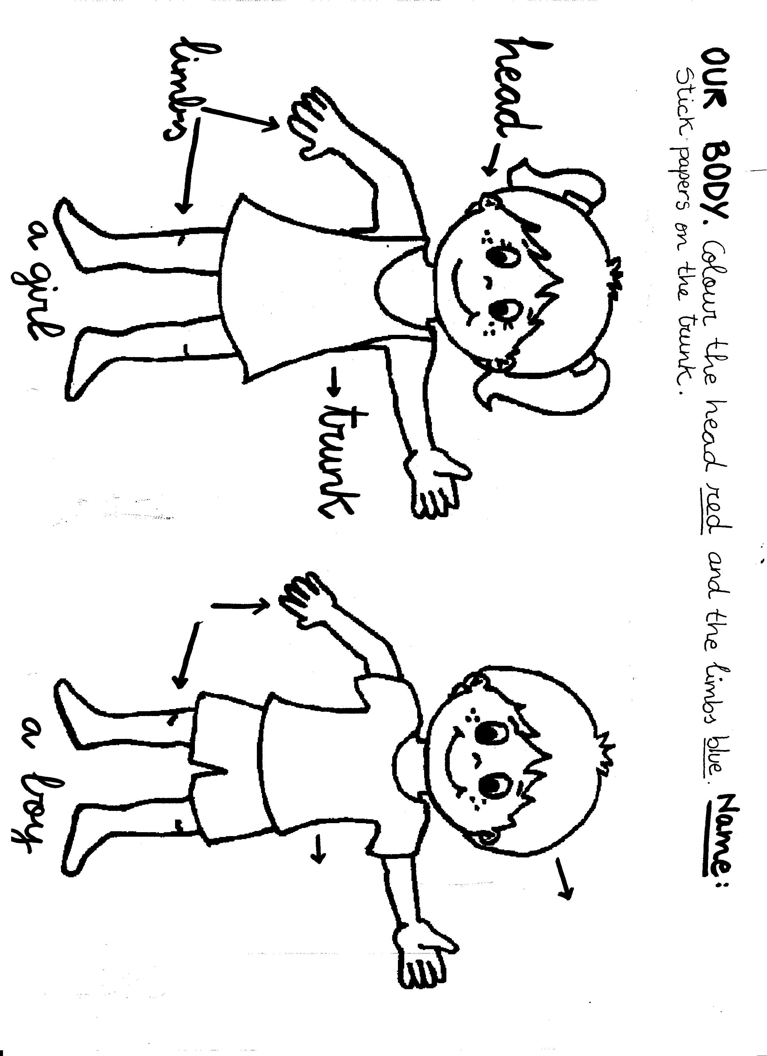 My Body Preschool Color Sheet Google Search