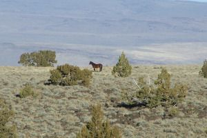 This wild horse looking across the vista appears to be wondering the same thing that continually crossed our minds during this three day jou...