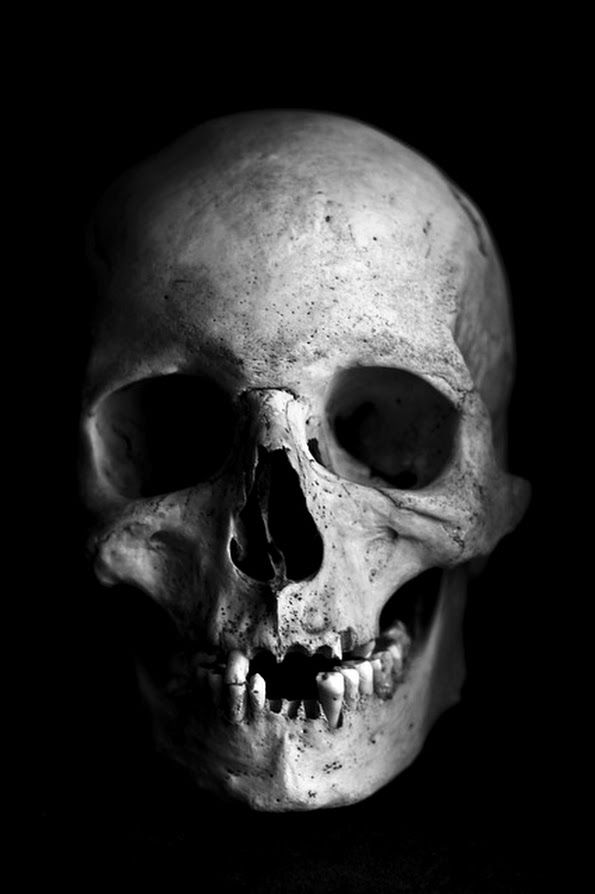 Human Skull Photography Black And White