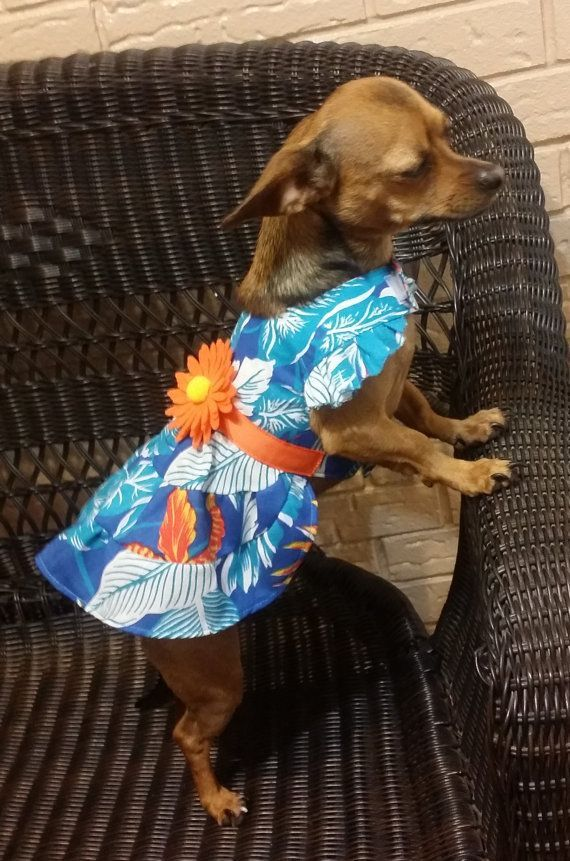 Dog Dress Pattern Dog Clothes Sewing Pattern pdf Tutorial | Dog ...
