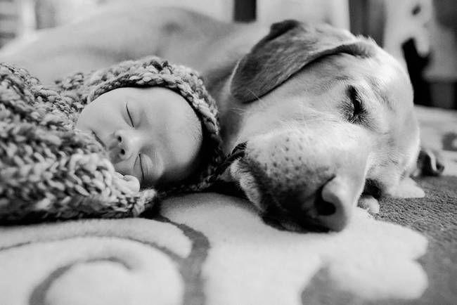 Perro Cuidando Bebe 3 Fotos De Perros Perros Y Bebes Perros Recien Nacidos