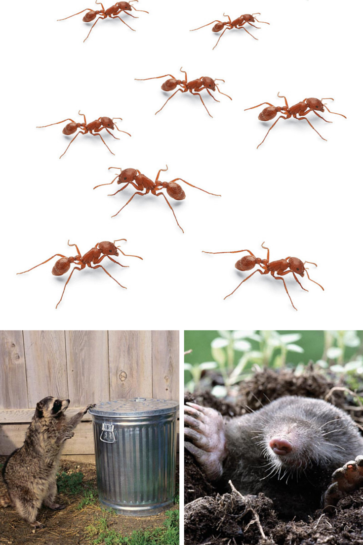 Diy Pest Control Supplies Pin By The Family Handyman On New Smart Homeowner Diy Pest