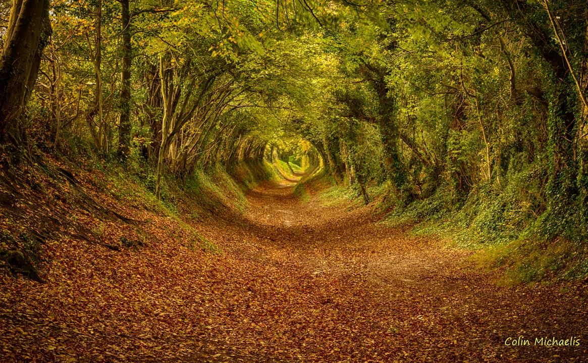 Wooded Path Pictures
