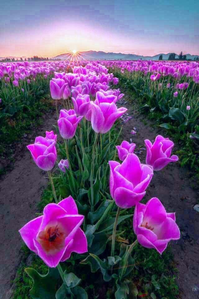 Pin By Paula Lane On Paisajes Beautiful Flowers Pictures Beautiful Flowers Flower Pictures