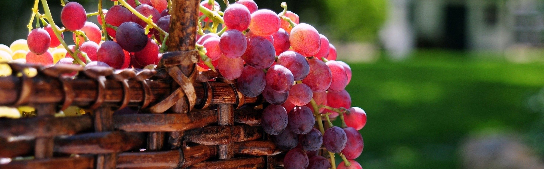 Sweet Grapes Wallpaper Hd Wallpapers Grapes Fruit Grape Wallpaper