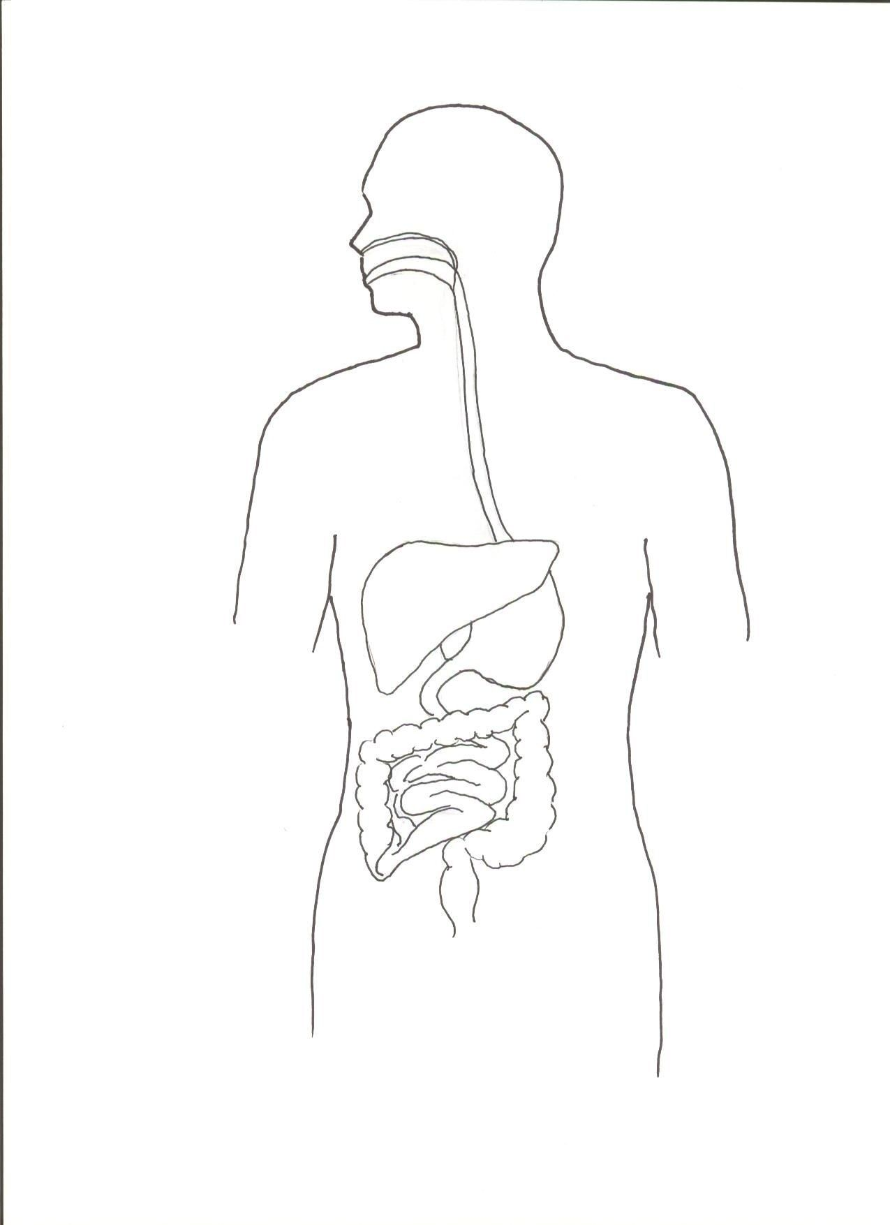 Simple Digestive System Diagram