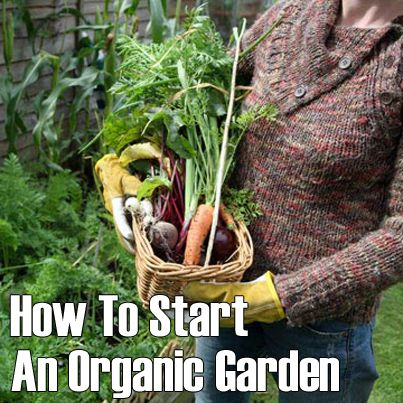 We Love These Easy Tips And Ideas On How To Grow Your Own Delicious,  Healthful Organic Food. Learn How To Start Your Own Organic Garden In These  9 Easy ...