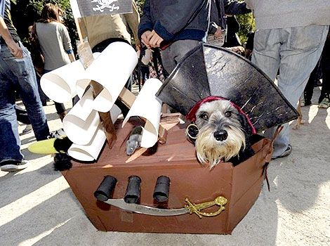 Tompkins Square Halloween Dog Parade On Oct 20 Bing Images