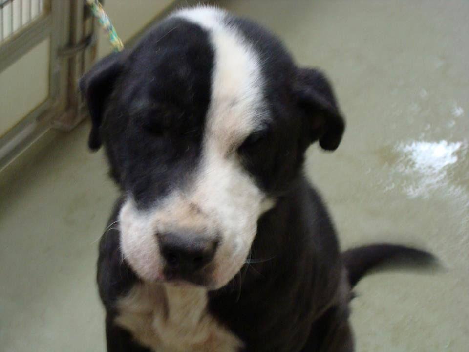 Super Urgent Plea From Maury County Humane Society Columbia Tenn