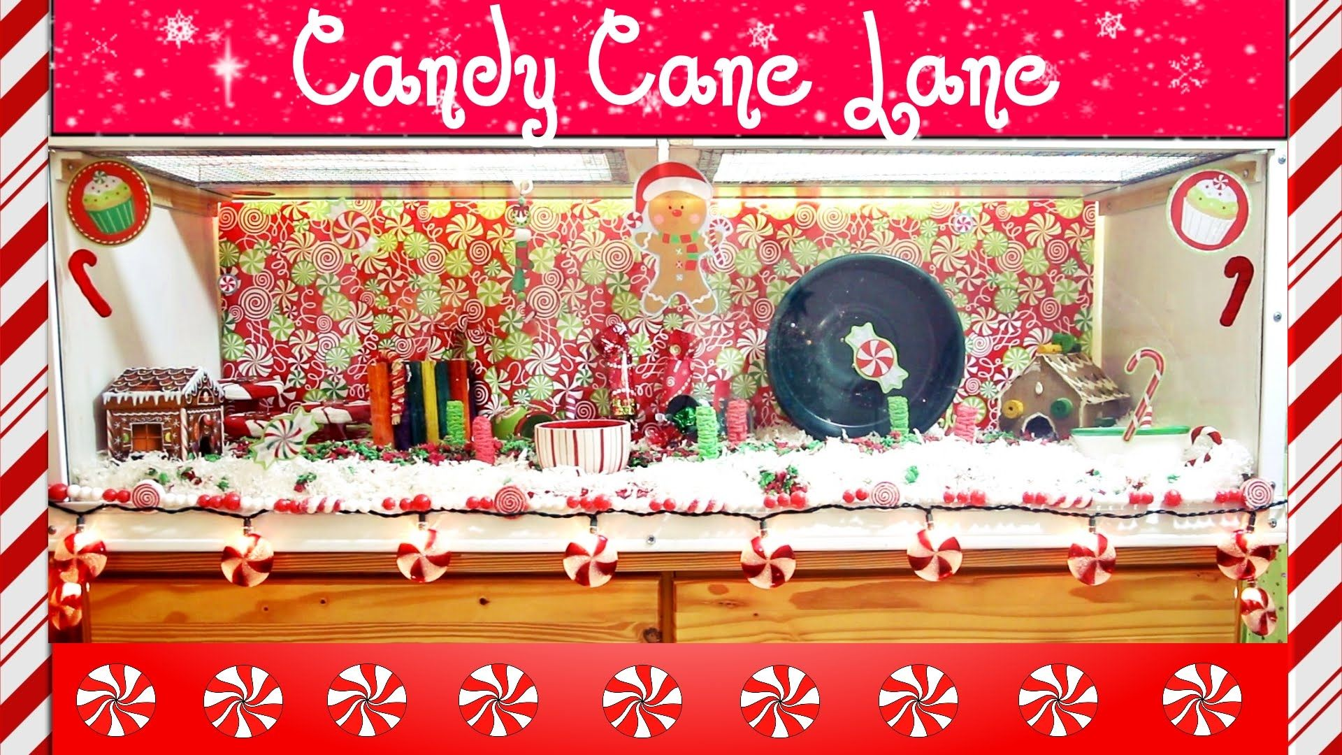 """Candy Cane Lane Decorations Candy Cane Lane"""" Hamster Cage Theme  Small Animals Horses"""