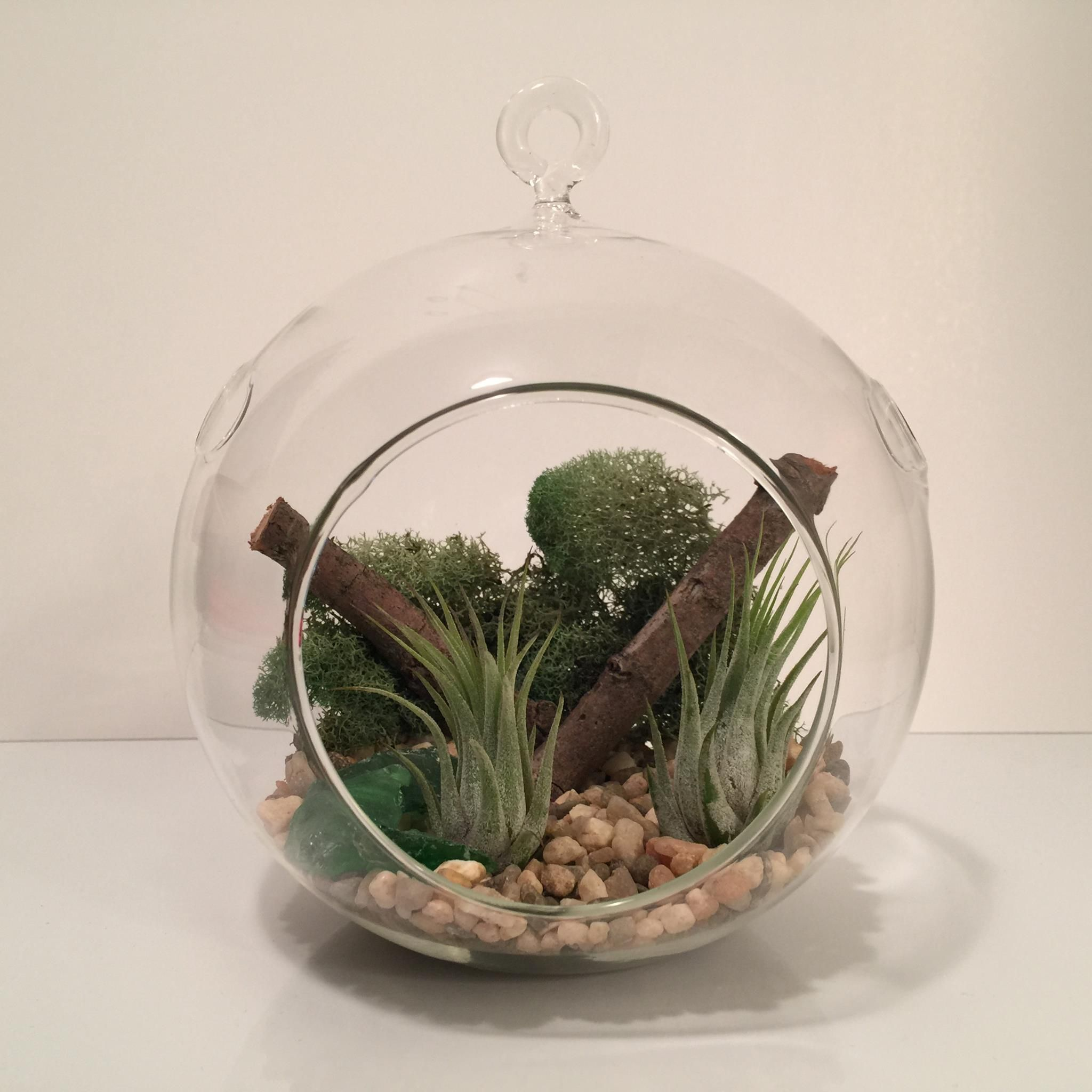 Large Round Air Plant Terrarium. Natural rock accents
