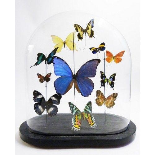 vlinderstolp multi-500x500.jpg (500×500)