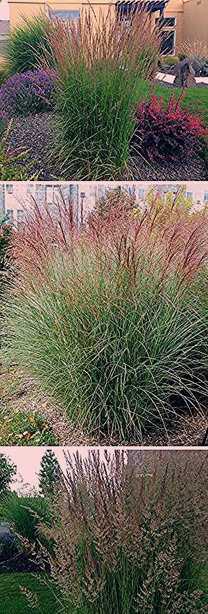 Photo of appeal gaertnern grtnern kant kraut pflanze