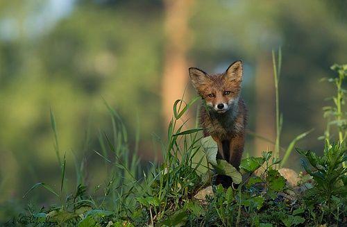 35PHOTO - Александр Чибиркин - Обитатели каменных джунглей.
