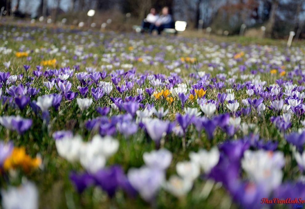 Những bức ảnh tuyệt đẹp về mùa xuân Spring, Botanical