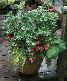 Plants for Year-round Containers