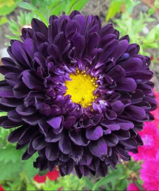 All Purple Flowers Are Beautiful And With Meanings Of Their Own So Which Do You Prefer Beau Purple Flowers Types Of Purple Flowers Purple Flower Pictures