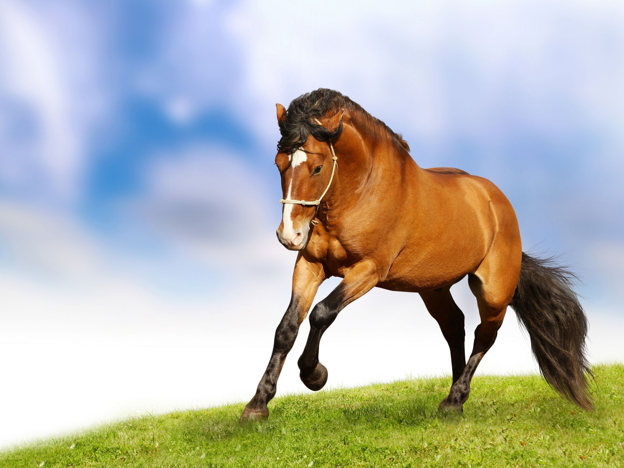 Simple Wallpaper Horse Iphone 5s - 60a95a02eb5e634dcd91fda06dee658d  Picture_605219.jpg
