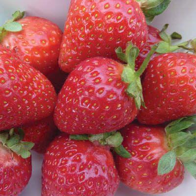 acido urico dieta baja en purinas imagenes de el acido urico frutas q producen acido urico