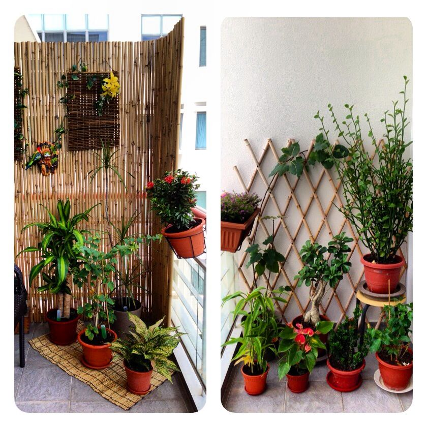 Gardening condostyle Our small balcony garden Great stress