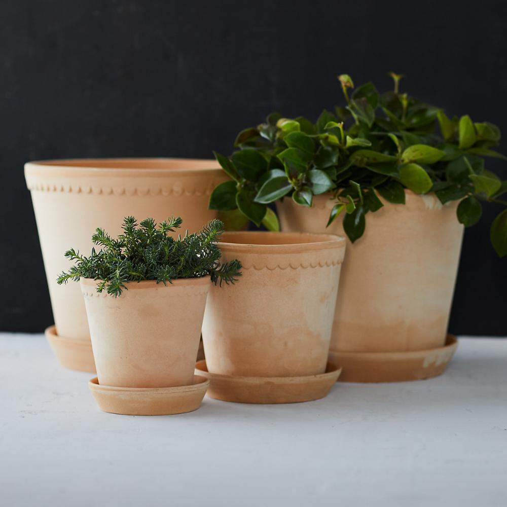 Bergs Scallop Pot Saucer Easy Plants To Grow Pot Designs Making Plant Pots
