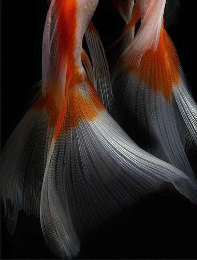 photographer Hiroshi Iwasaki  #photography #macro #macro_photography
