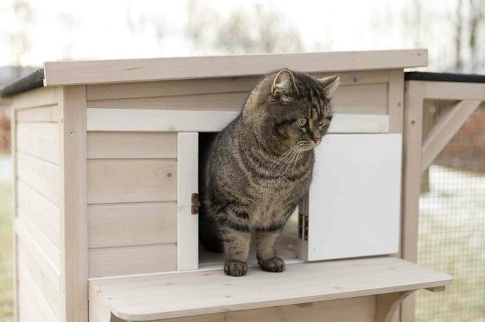 Your Cat Can Now Hop The Property Ladder With A Luxury Cat House
